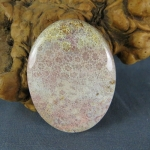 Indonesian Fossil Coral Cabochon 110