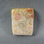 Indonesian Fossil Coral Cabochon 134
