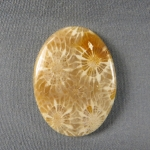 Indonesian Fossil Coral Cabochon 154