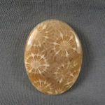 Indonesian Fossil Coral Cabochon 157