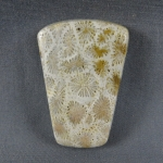 Indonesian Fossil Coral Cabochon 168