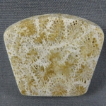 Indonesian Fossil Coral Cabochon 171