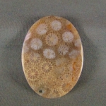 Indonesian Fossil Coral Cabochon