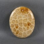 Indonesian Fossil Coral Cabochon 24