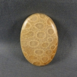 Indonesian Fossil Coral Cabochon 25